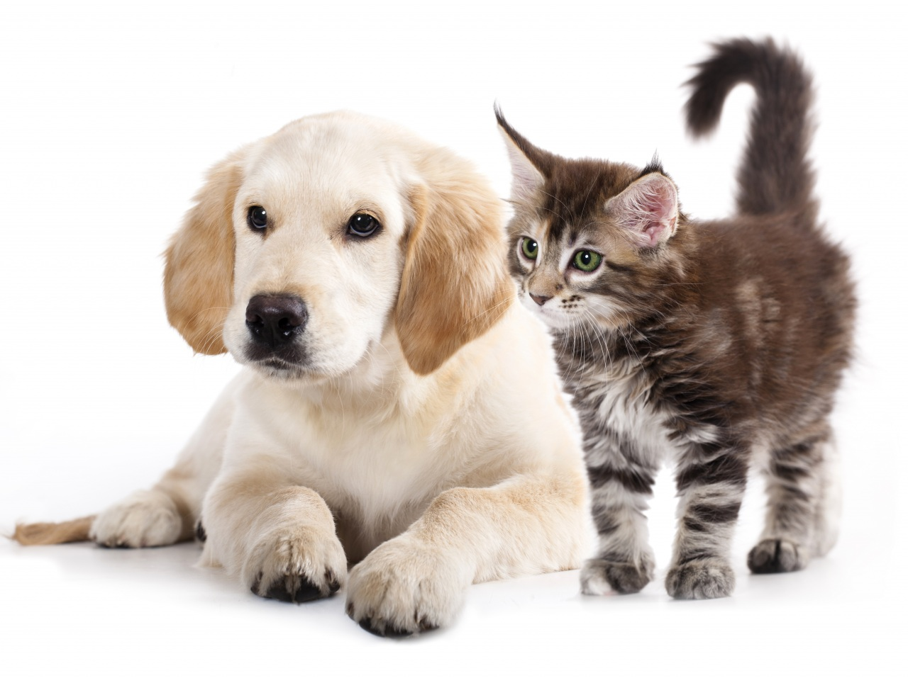 Dogs_Cats_Kittens_Puppy_436744.jpg