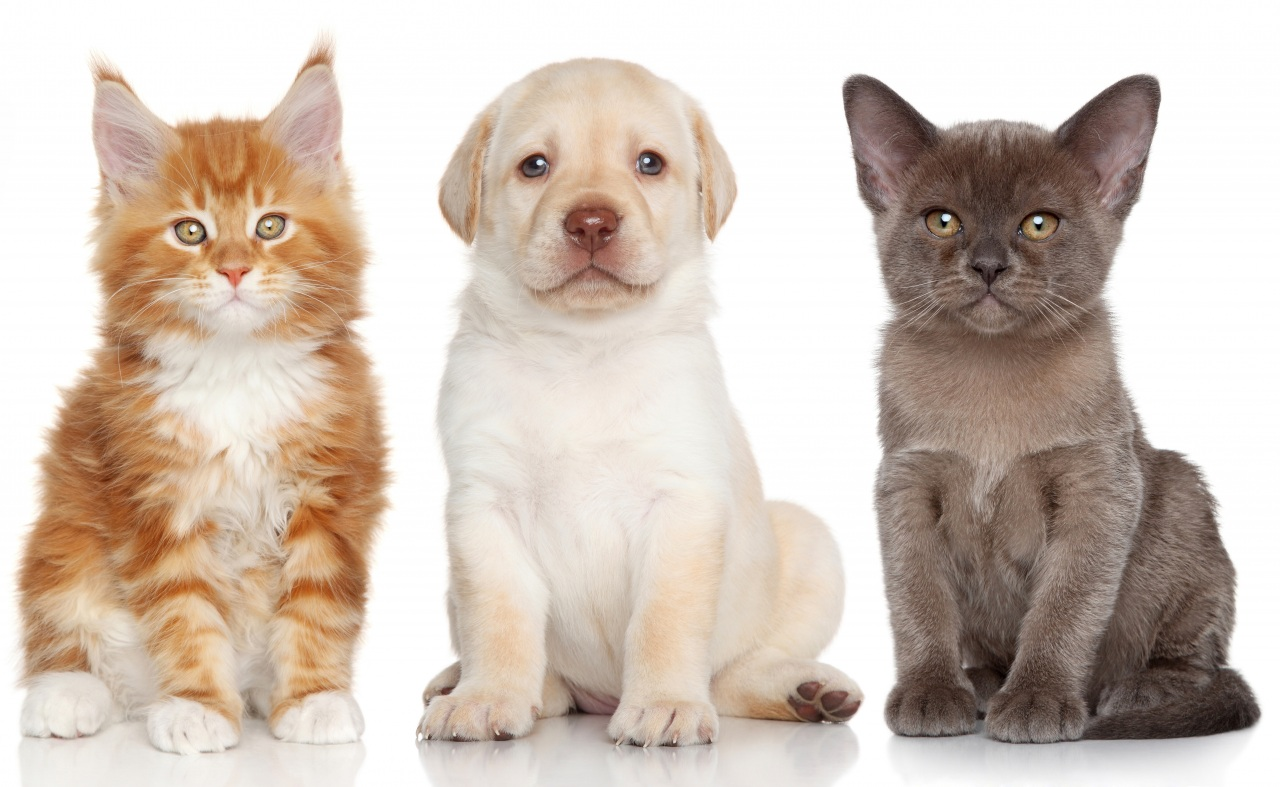 Dogs_Cats_Kittens_Puppy_441253.jpg