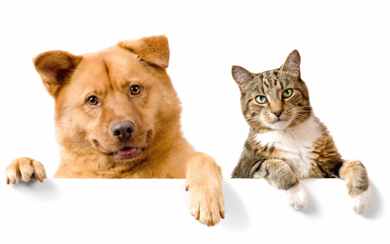 Dogs_Cats_Two_Glance_436307.jpg